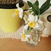小さなスイレンの花