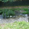 武蔵小金井 野川と湧水めぐり3(鞍尾根橋~花と緑の小径)