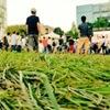 モヤみもありつつ続くに越したことはない。 - TOKYO IDOL FESTIVAL 2019