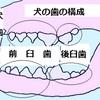 歯のはえかわり