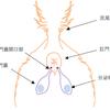 肛門周囲掻痒症