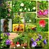 5月『つる植物の園 管理カレンダー』