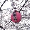 板橋区の桜のこと。
