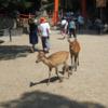 今日の1枚 ~奈良公園の鹿たち~