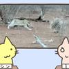ヤマアラシのフレンズ、ヒョウに襲われてもへっちゃらですごーい