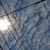 昆虫と種びっしり注意。2019年8月25日までに撮影したデジカメ写真。うろこ雲が見えてほんのり秋を感じました
