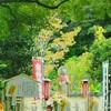 京都の鈴虫寺は恋愛に効果あり!?体当たりで検証してみた。