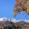Fall Foliage and Snow Capped Mountains Make a Beautiful Scene in Hakuba Nagano Japan 2019/2020 - HAKUBA VALLEY