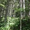 北海道の林道を散歩する