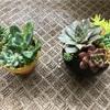 【花と器のある暮らし】自分の器に多肉植物を飾りたい!