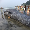 ウィキペディアの由比ヶ浜の記事にシロナガスクジラの画像が載ったよの巻