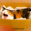 【愛猫日記】毎日アンヌさん#228