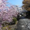 コロナで京都の桜が見れなかったので過去の旅を慰みにする