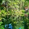 光前寺の池(長野県駒ヶ根)