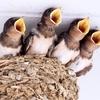 ⑩人と鳥が共存できる街