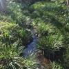 引地川を歩く 相模原台地から流れ下る川その1