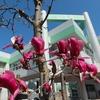 桜が咲き出しました。2020 - 都筑の風景