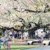 Snapshot@桜の風景#2