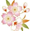美しいだけじゃない!桜の花にはアンチエイジング効果があった!