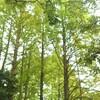やっと行った。九大の森