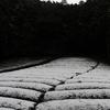 雪が降った和束町で写真を撮ってみたら・・【和束町の茶畑から】