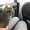 タモン、初のドライブ〜!