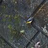 里山で野鳥観察@OM-D E-M5