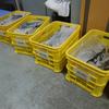 es-BANK試料整理 鳥類整理FINAL