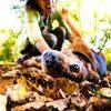 ドイツの犬は日本の子どもより幸せかもしれない。酔った勢いでペットを買う国とペットも市民だと考える国。