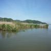 ブラックバス釣行記 西の湖 2012年5月13日