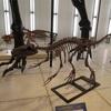 恐竜ウオーク