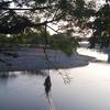白川のアユ釣り
