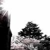 山手の桜 2017.4.13 Ⅸ