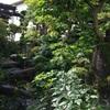 今朝の我が家の庭です。