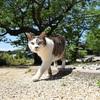 信州の猫寺「瑠璃寺」