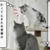 猫雑記 ~ぎゅうぎゅうお昼寝~