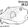 ハコフグ(Ostraciidae)【魚ぬり絵】