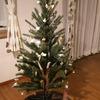カフェイン断ち10日が過ぎました、未だ頭痛の中クリスマスの飾り付けをしたの巻