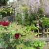 藤の花やチューリップ