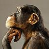 「不安」を感じていたからこそ生き延びたのだ ◆ 「Think clearly」- 2
