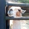 行ったよ!宇都宮動物園に!