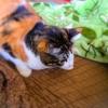 【愛猫日記】毎日アンヌさん#190