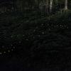 """千葉で今がシーズンの""""ヒメボタル""""の写真を撮ってきた"""