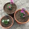 4-59   愛すべき花たち〜花の追加をしました〜