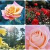 最新動画『ヒーリングミュージック ~Rose Garden~』を投稿しました!
