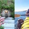 ニンゲン・トモダチ?ニンゲンのペット・仲間?人間の住む家に訪れた野生動物たちの写真