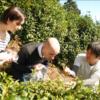【体験情報】茶畑ハイキング&茶摘み体験ツアー ~煎茶・抹茶飲み比べ体験付き・英語OK~