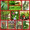 つる植物の園  植物図鑑