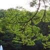 空と水と緑と幸せ