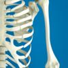 呼吸を深めるために大切な肋骨のお話~理学療法士が教えるヨガと解剖学~